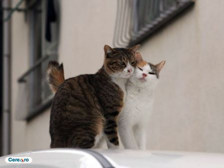 pisici noi